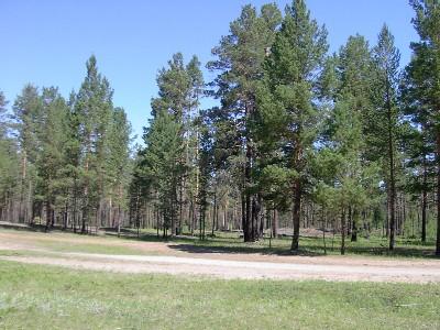 残存するアカマツ天然林
